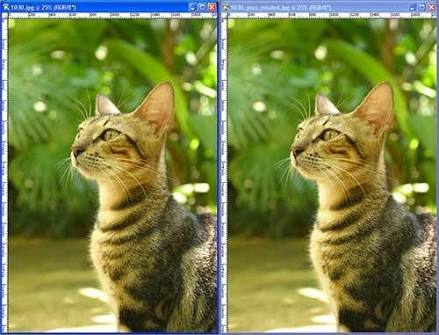 How You Can Optimize Your Images According To SEO